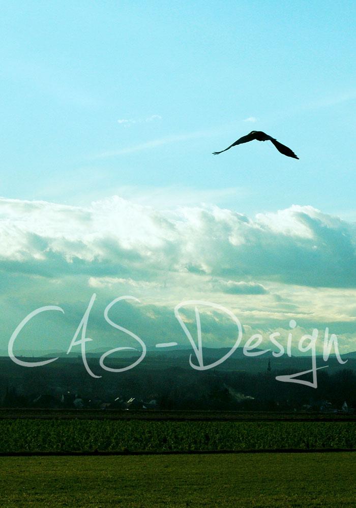 landscape_bird