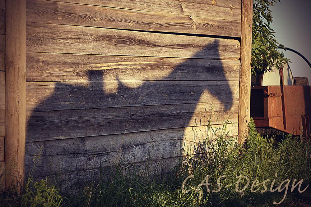 pferd_schatten